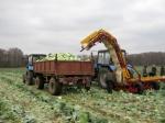 Транспортер-погрузчик для овощей универсальный ТПУ